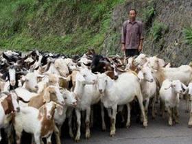 养殖业什么最赚钱农村,农村最好的挣钱方法有什么?